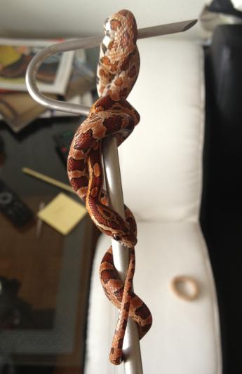 Das erste und auch letzte Mal als ich den Schlangenhaken benutzte