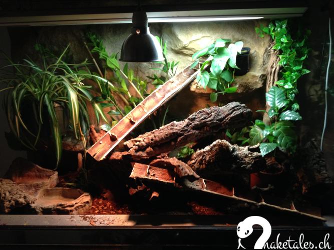 das terrarium snaketales. Black Bedroom Furniture Sets. Home Design Ideas