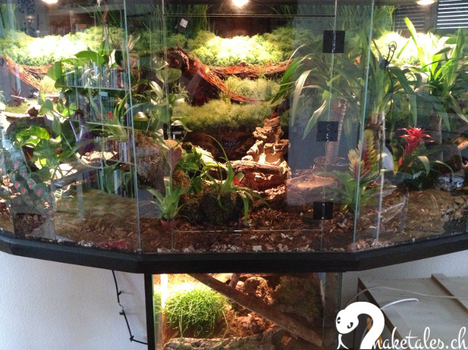 terrarium snaketales. Black Bedroom Furniture Sets. Home Design Ideas