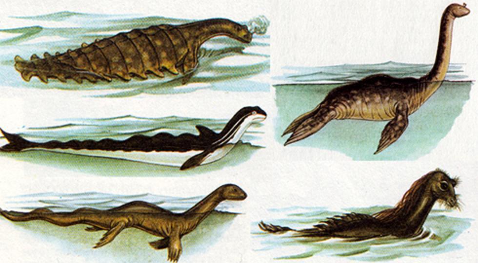 Seeschlangen