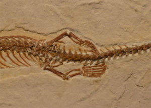 htt©©p://phenomena.nationalgeographic.com/2015/07/23/a-fossil-snake-with-four-legs/